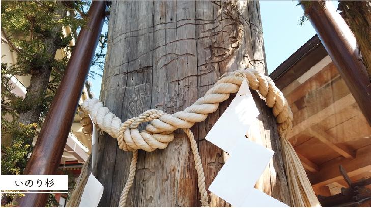 地主神社のご神木「祈り杉」