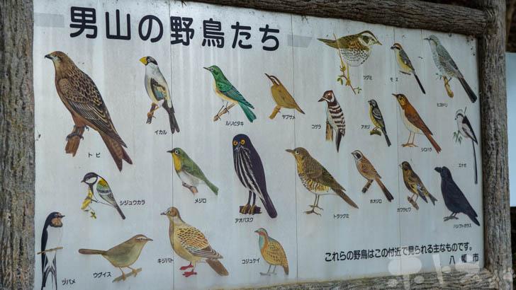 岩清水八幡宮の野鳥