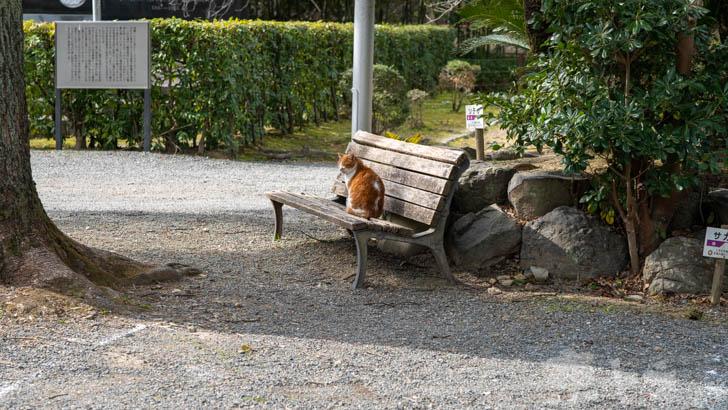 岩清水八幡宮の猫